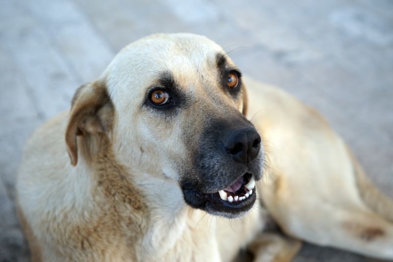dog at animal hospital